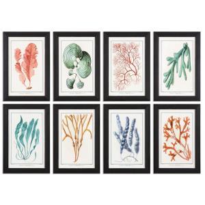 "Colorful Algae - 18.5"" Floral Wall Art (Set of 8)"