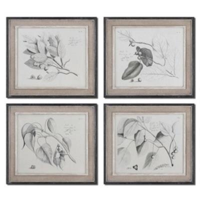 "Uttermost 51073 Sepia Leaf Study - 23.63"" Botanical Wall Art (Set of 4)"
