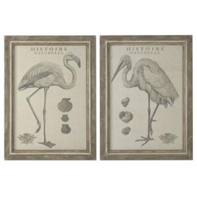 "Uttermost 51077 Natural History - 40"" Decorative Wall Art - (Set of 2)"